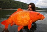 goldfish: a lesson in pet-owning